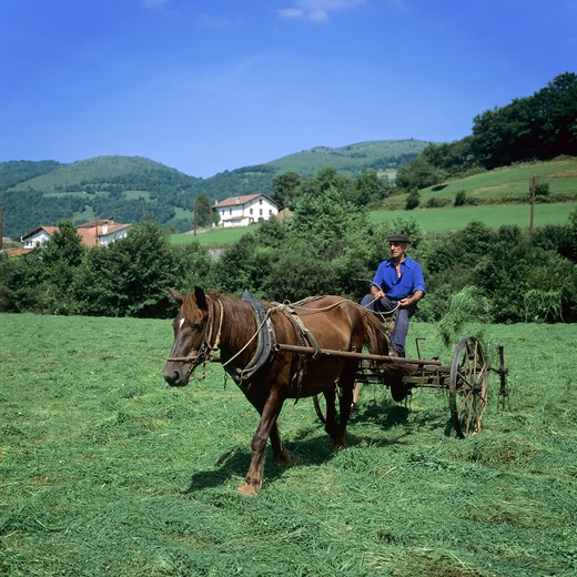 Stock Photo: 4285-10338 FARMER TURNING HAY WITH A HORSE-DRAWN TEDDER BASQUE COUNTRY FRANCE