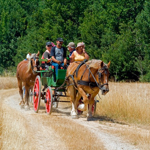 Stock Photo: 4285-11051 horse-drawn carriage touring tourists provence france