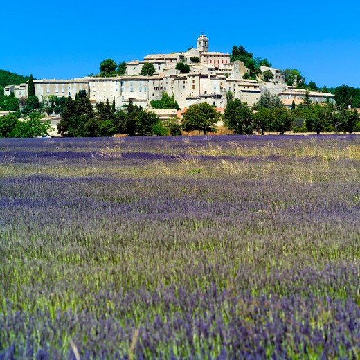 Stock Photo: 4285-11079 blossoming lavender field and banon village haute-provence alps france
