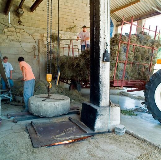 men unloading lavenders at distillerie du vallon lavender oil distillery provence france : Stock Photo