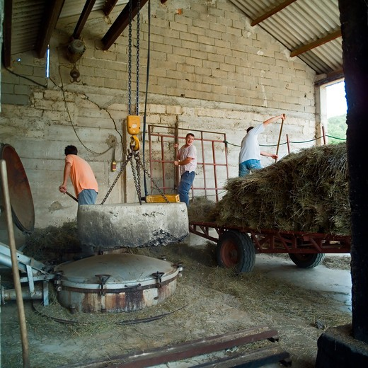 Stock Photo: 4285-11247 men unloading lavenders at distillerie du vallon lavender oil distillery provence france