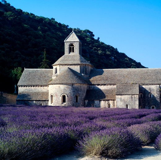 Stock Photo: 4285-11259 rows of blossoming lavender and senanque abbey 12th century provence france