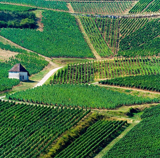 Stock Photo: 4285-11390 aerial of vineyard chateau-chalon jura france