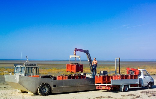 Stock Photo: 4285-12407 amphibian truck unloading mussels gathering brittany france
