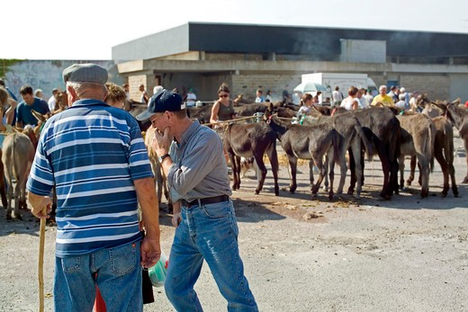 people and donkeys at annual livestock market ploubalay brittany france : Stock Photo
