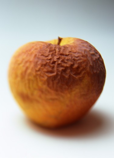 Stock Photo: 4285-13761 ONE ROTTEN AND WRINKLED YELLOW GOLDEN DELICIOUS APPLE