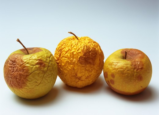 THREE ROTTEN AND WRINKLED YELLOW GOLDEN DELICIOUS APPLES : Stock Photo