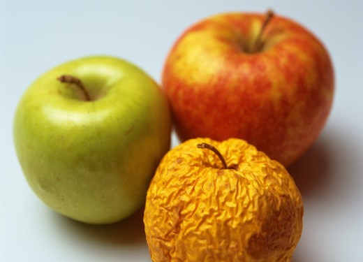 ONE WRINKLED YELLOW GOLDEN DELICIOUS WITH FRESH GRANNY SMITH AND PINK LADY APPLES : Stock Photo