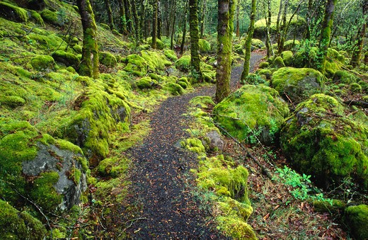 Stock Photo: 4285-1395 Trail through moss covered forest and rocks along the Columbia River Gorge, Fort Cascade National Historic Site, WA.