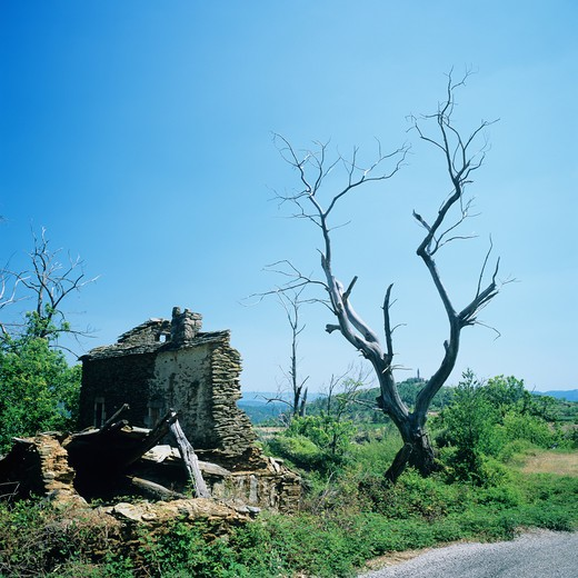 RUINED HOUSE AND LEAFLESS TREE ARDECHE FRANCE : Stock Photo