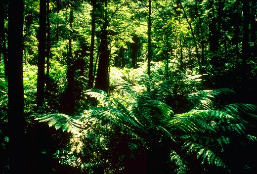 Rainforest  This image is from Australia. : Stock Photo
