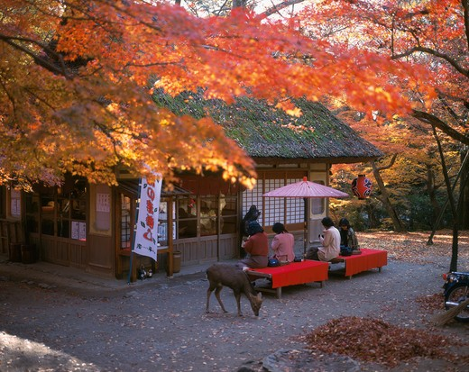 Stock Photo: 4285-16661 Outdoor cafe and tea house in Nara, Japan