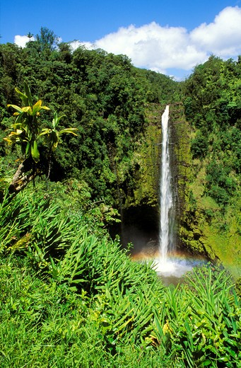 Stock Photo: 4285-1689 Lush vegetation framing Akaka Falls, Akaka Falls State Park, Hamakua Coast, The Big Island, Hawaii