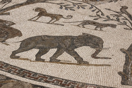 Stock Photo: 4285-17735 Africa, North Africa, Morocco, Roman Ruins of Volubilis, Mosaic Tiles