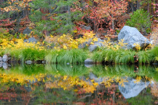 Stock Photo: 4285-2402 Fall color and grasses along the Merced River, Yosemite Valley, Yosemite National Park, California