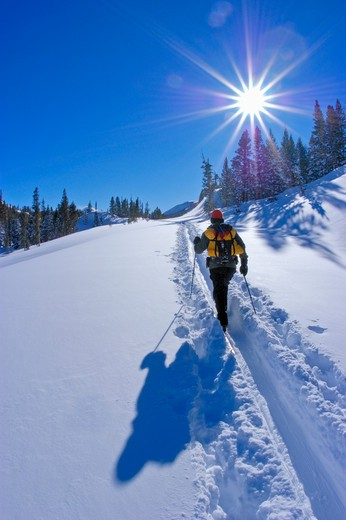 Backcountry skier in fresh snow below Tioga Pass, Inyo National Forest, Sierra Nevada Mountains, California : Stock Photo