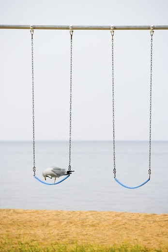 Stock Photo: 4285-3223 Gray beach and ocean setting, reddish sand, close-up of two simple beach swings and a large, gray seagull perched on one swing with one leg drawn up to face.