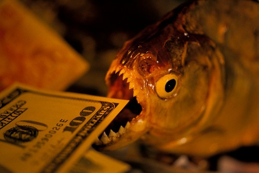 Stock Photo: 4285-4046 A piranha fish about to take a bite out of a $100 bill.