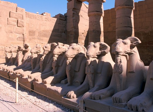 Stock Photo: 4285-4706 Sphinxes, Temple of Karnak, Egypt