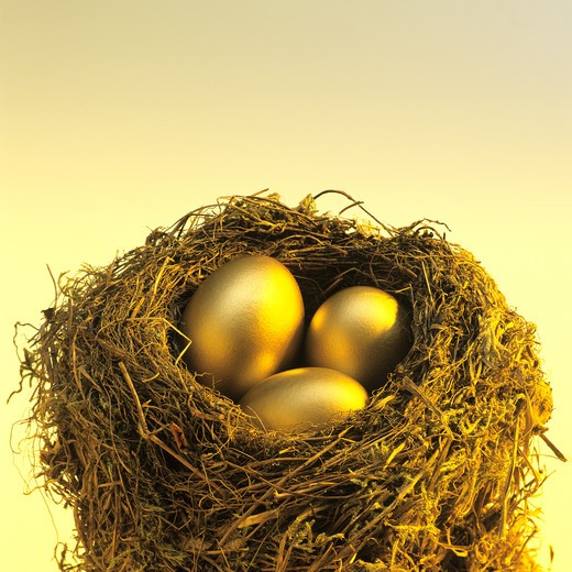 3 GOLDEN EGGS IN A BLACKBIRD'S NEST. : Stock Photo