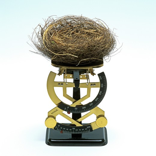 Stock Photo: 4285-5972 EMPTY BIRD'S NEST ON A LETTER SCALE.