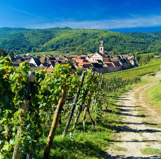 FRANCE ALSACE VINEYARD AND RIQUEWHIR VILLAGE : Stock Photo