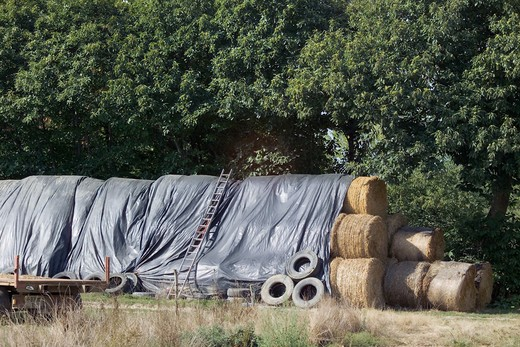 Stock Photo: 4285-8599 FRANCE BRITTANY WHEAT STRAW BALES PROTECTED WITH A  PLASTIC COVER