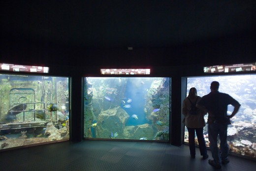 FRANCE BRITTANY SAINT-MALOGRAND AQUARIUM OCENARIUM : Stock Photo