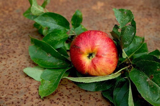 Stock Photo: 4285-8746 1 ROYAL GALA RED APPLE AND LEAVES ON A RUSTY GARDEN TABLE