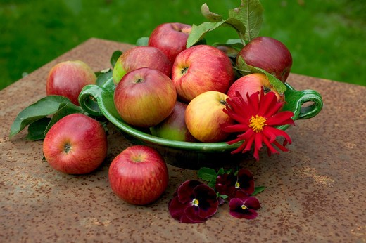 ROYAL GALA RED APPLES WITH LEAVES IN A GREEN BOWL AND PENSY AND DAHLIA FLOWERS ON A RUSTY GARDEN TABLE : Stock Photo