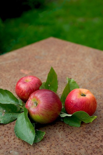 3 ROYAL GALA RED APPLES WITH LEAVES  ON A RUSTY GARDEN TABLE : Stock Photo