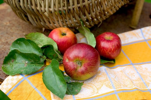 3 ROYAL GALA RED APPLES AND LEAVES ON A YELLOW NAPKIN AND WICKER BASKET : Stock Photo