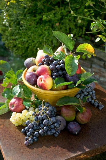 Stock Photo: 4285-8791 SEASONAL STILL LIFE WITH AN ASSORTMENT OF AUTUMNAL FRUITS IN A YELLOW BOWL