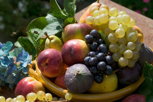 Stock Photo: 4285-8839 SEASONAL STILL LIFE WITH AN ASSORTMENT OF AUTUMNAL FRUITS IN A YELLOW BOWL AND A BLUE HYDRANGEA FLOWER