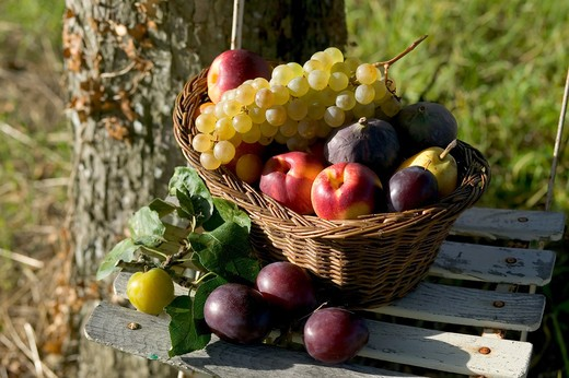 SEASONAL STILL LIFE WITH AN ASSORTMENT OF AUTUMNAL FRUITS IN A WICKER BASKET : Stock Photo