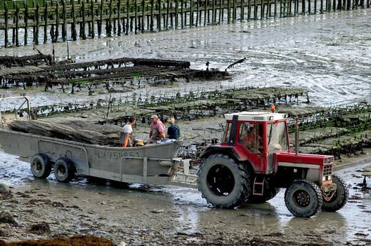 OYSTER FARMING CANCALE BRITTANY FRANCE : Stock Photo