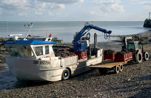 Stock Photo: 4285-8935 AMPHIBIAN TRUCK UNLOADING MUSSELS CANCALE HARBOUR BRITTANY FRANCE