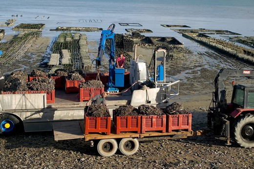 AMPHIBIAN TRUCK UNLOADING MUSSELS CANCALE HARBOUR BRITTANY FRANCE : Stock Photo
