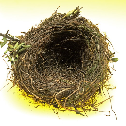 Stock Photo: 4285-9052 EMPTY BIRD'S NEST