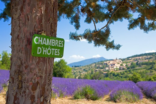 BED AND BREAKFAST SIGN AND BLOOMING LAVENDER FIELD PROVENCE FRANCE : Stock Photo