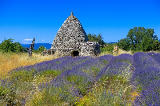 Stock Photo: 4285-9544 BLOOMING LAVENDER FIELD AND BORIE STONE SHELTER WITH WELL PROVENCE FRANCE