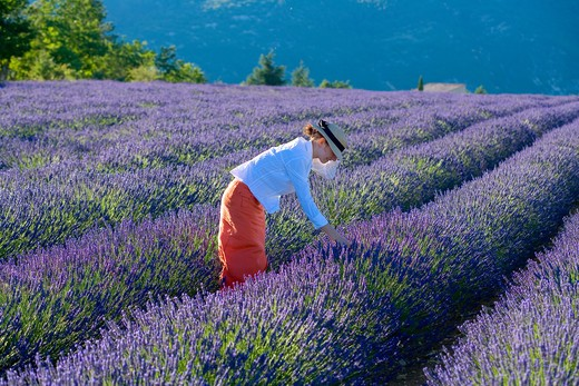 Stock Photo: 4285-9573 YOUNG WOMAN IN BLOOMING LAVENDER FIELD PROVENCE FRANCE