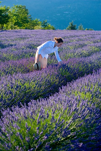 Stock Photo: 4285-9577 YOUNG WOMAN IN BLOOMING LAVENDER FIELD PROVENCE FRANCE