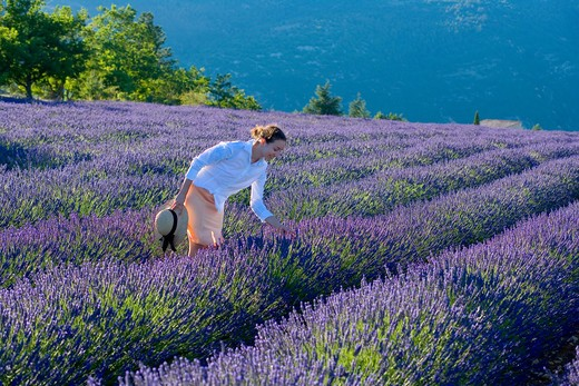 Stock Photo: 4285-9578 YOUNG WOMAN IN BLOOMING LAVENDER FIELD PROVENCE FRANCE
