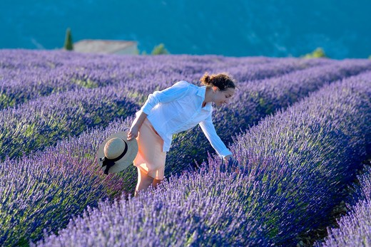 Stock Photo: 4285-9580 YOUNG WOMAN IN BLOOMING LAVENDER FIELD PROVENCE FRANCE