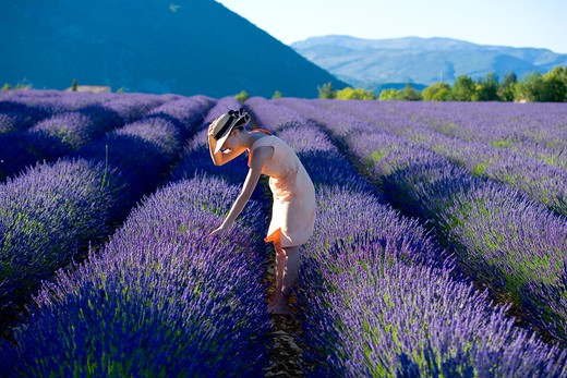 Stock Photo: 4285-9584 YOUNG WOMAN IN BLOOMING LAVENDER FIELD PROVENCE FRANCE