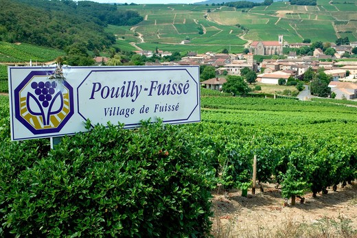 POUILLY-FUISSE SIGN VINEYARD AND FUISSE VILLAGE MACONNAIS WINE COUNTRY BURGUNDY FRANCE : Stock Photo