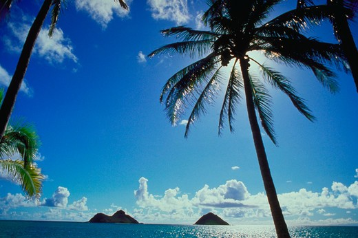 Stock Photo: 4286-18703 Palm tree against blue sky and clouds with islands in background, Lanikai Beach, Kailua, Oahu, Hawaii.