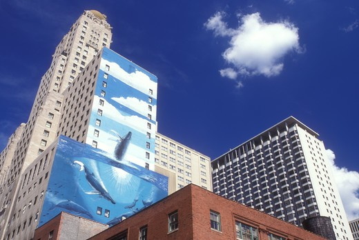 Illinois, Chicago, Skyline of downtown Chicago. Whale mural on wall of high rise building. : Stock Photo