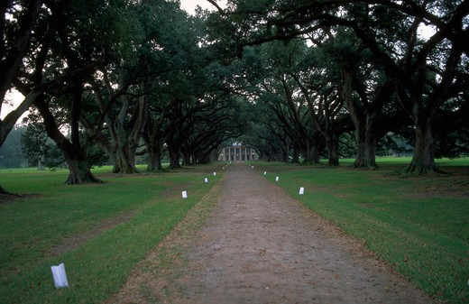 PLANTATION OAK ALLEY LOUISIANA : Stock Photo